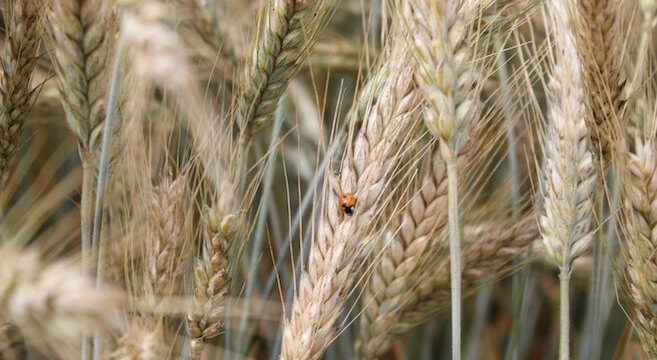 BayWa, Agrar, Handel, Aktie, Börse, Getreide,