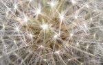 Allergy Therapeutics, Aktie, Börse, Heuschnupfen, Allergie